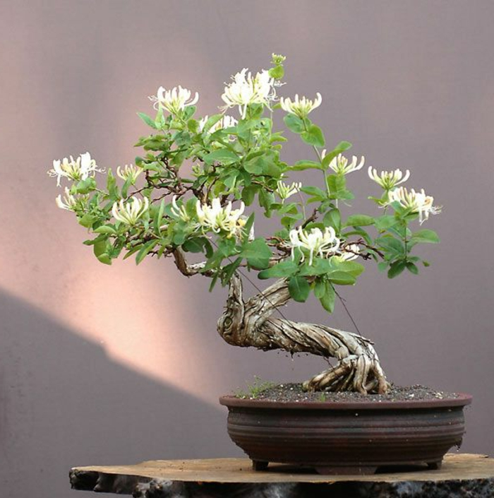 Tipo bonsai maceta flor