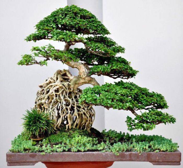 Bonsai Art puu Grass kaunis koostumus