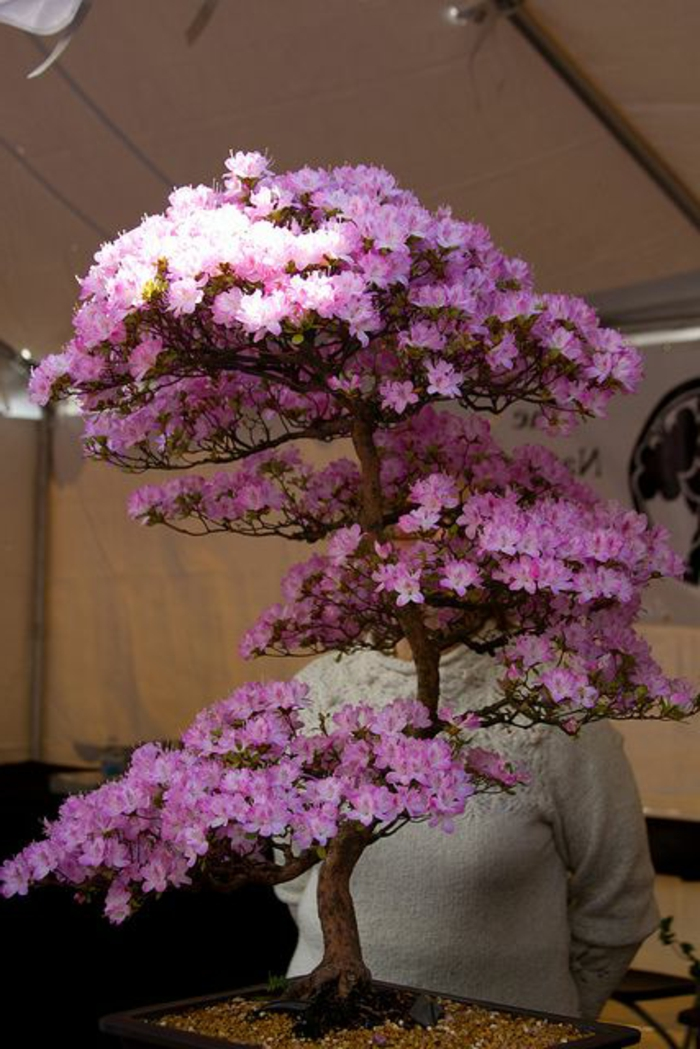 Bonsai Flor de cerezo rosada